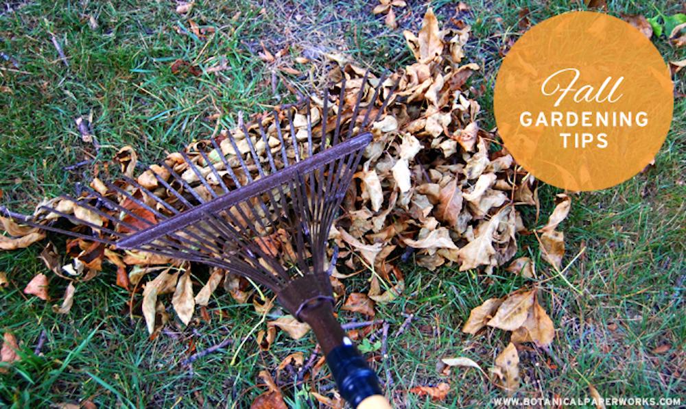 Fall Gardening Tips
