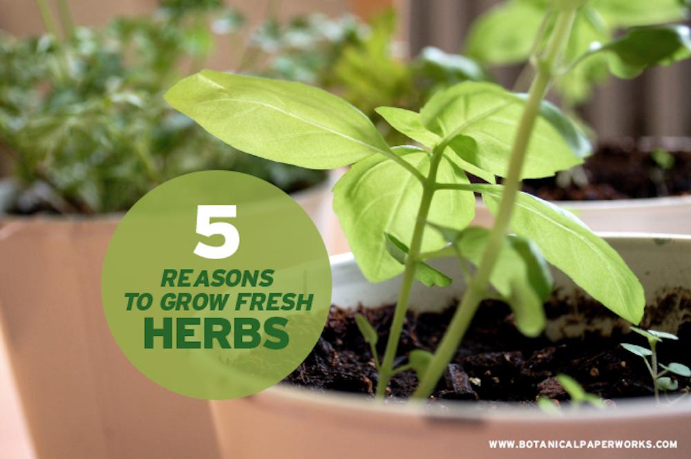 5 Reasons to Grow Fresh Herbs at Home