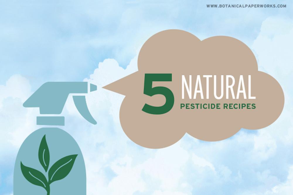 5 Natural Pesticide Recipes