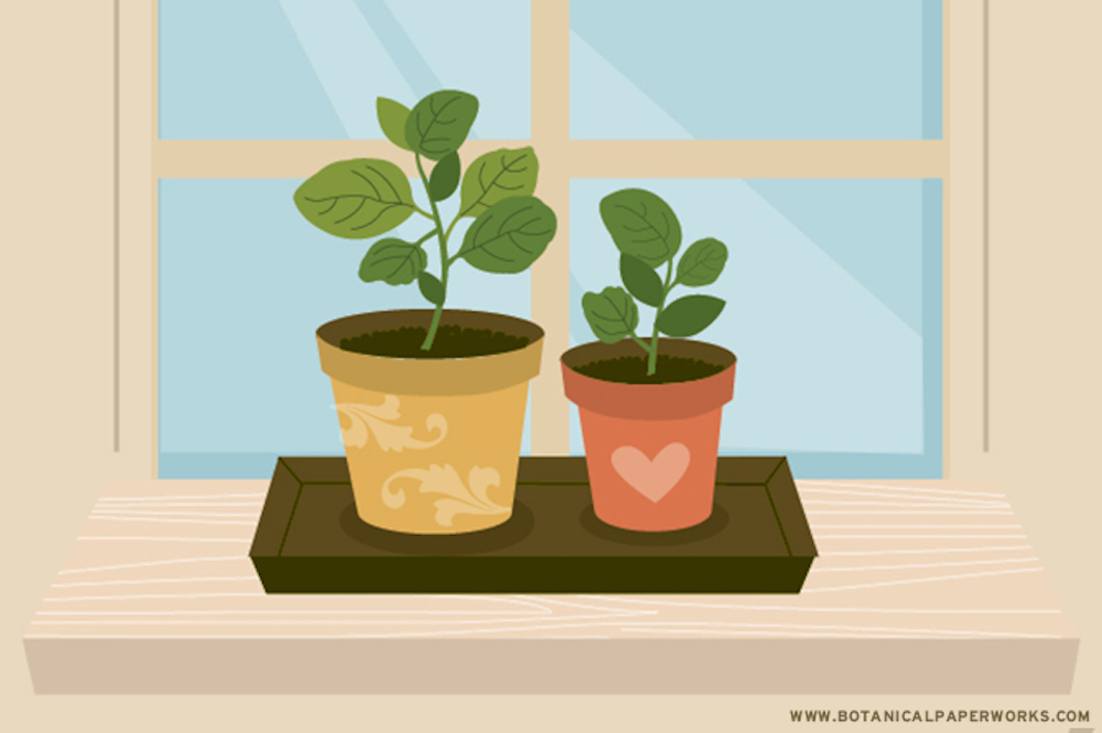 Basic Tips For Growing Basil Indoors