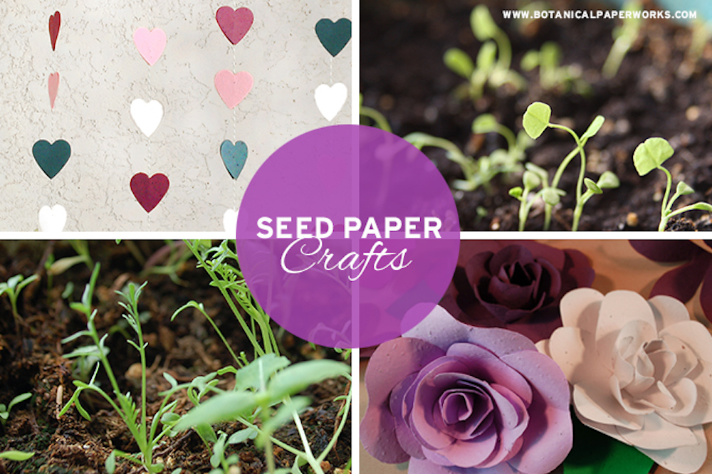 seed paper crafts