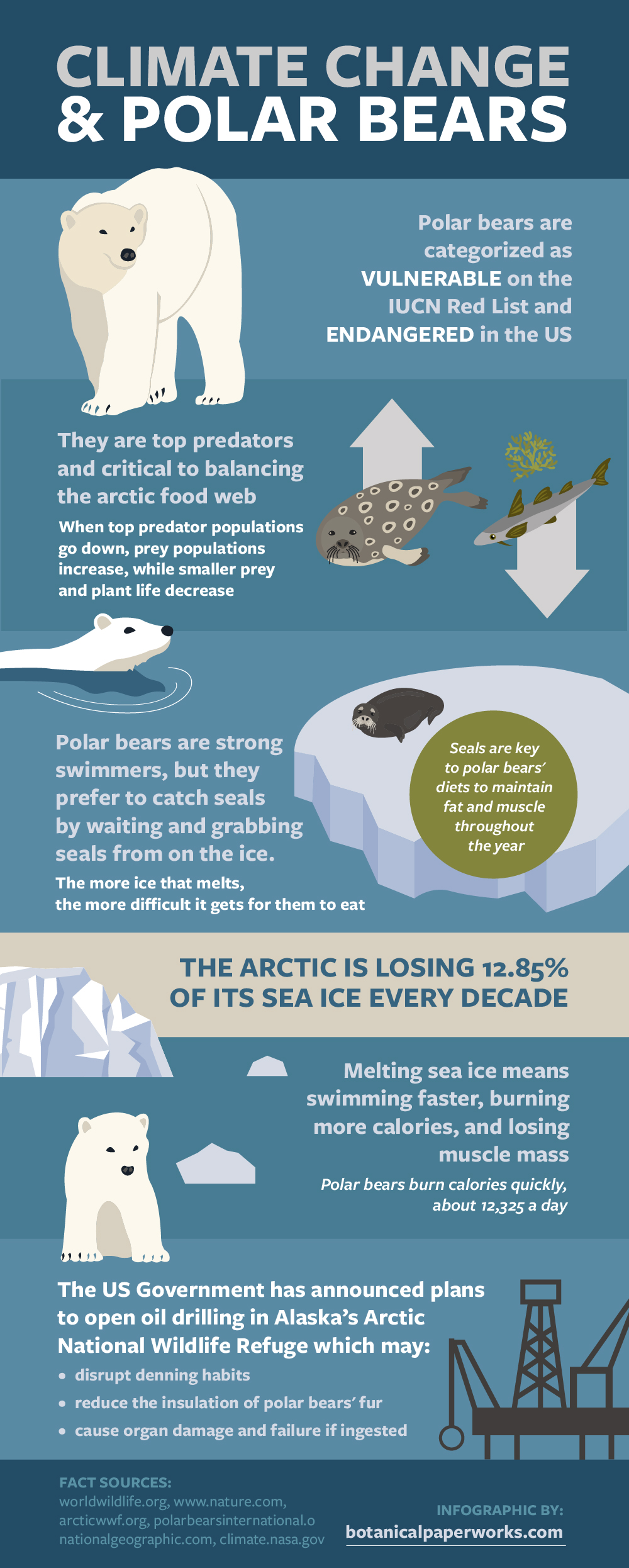 Created for International Polar Bear Day, this infographic highlights some important facts about polar bears and climate change to help raise awareness.
