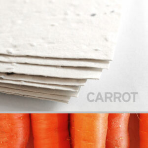 Plant this 11 x 17 White Carrot Plantable Seed Paper to grow fresh and delicious carrots.