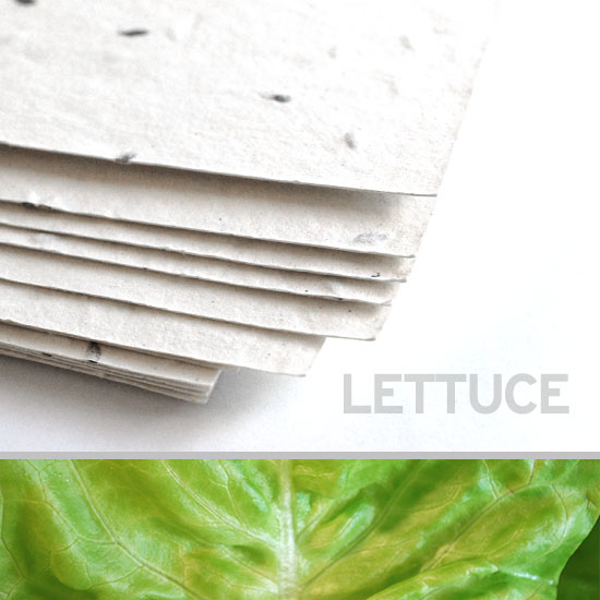 Each sheet of 11 x 17 White Lettuce Plantable Seed Paper is embedded with NON-GMO seeds that grow fresh lettuce.