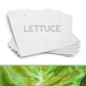 Plant this eco-friendly 8.5 x 11 White Lettuce Plantable Seed Paper to grow fresh lettuce.