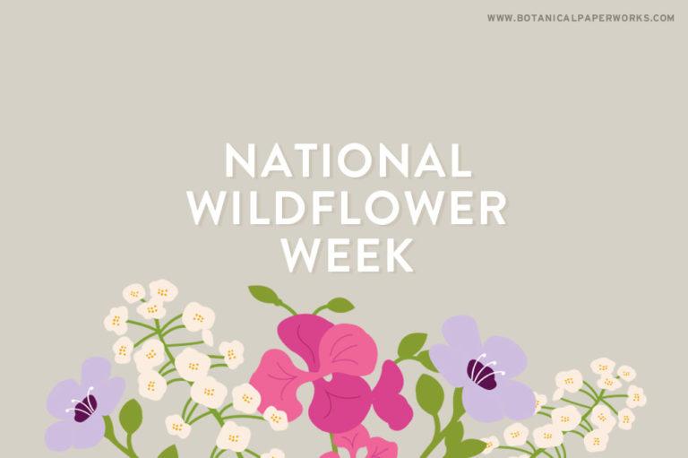 Celebrating National Wildflower Week
