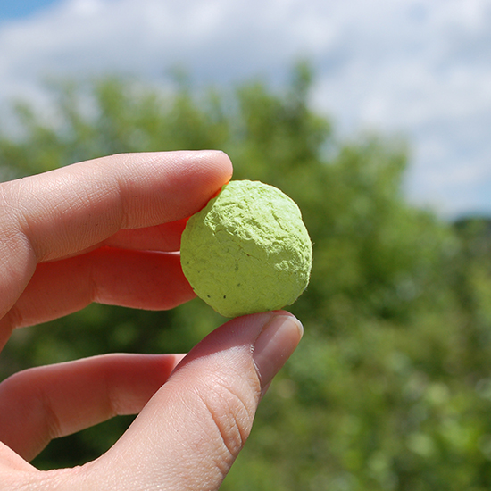 Grow the ultimate garden of basil, parsley and oregano with these Herb Bulk Seed Bombs.