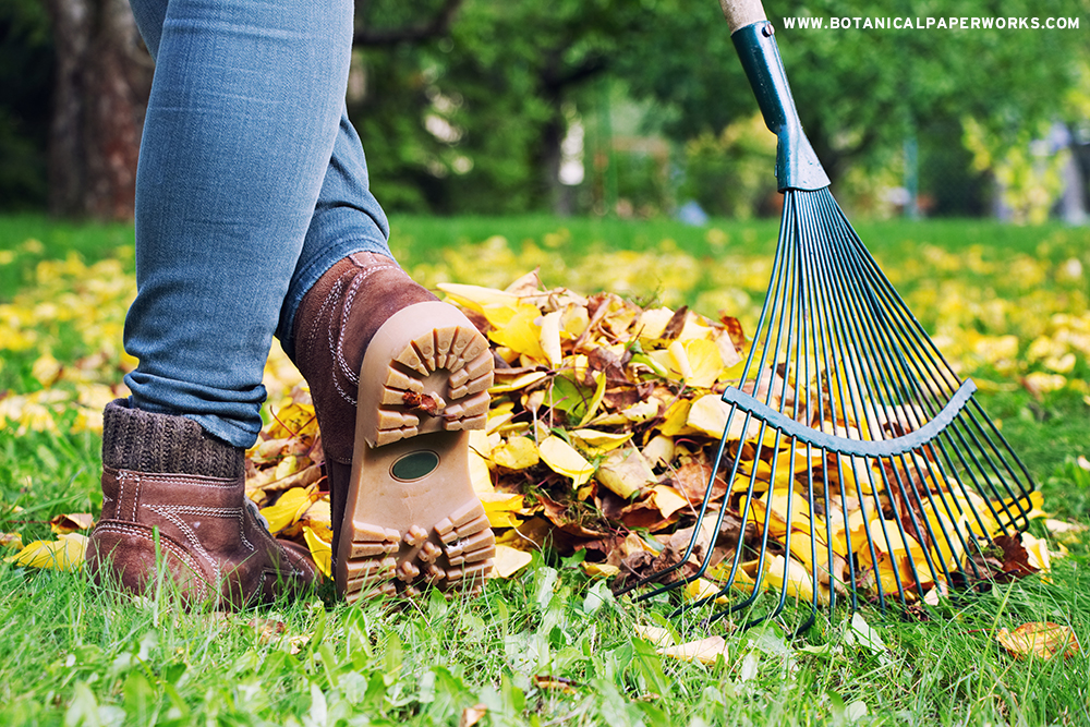 raking leaves in the backyard