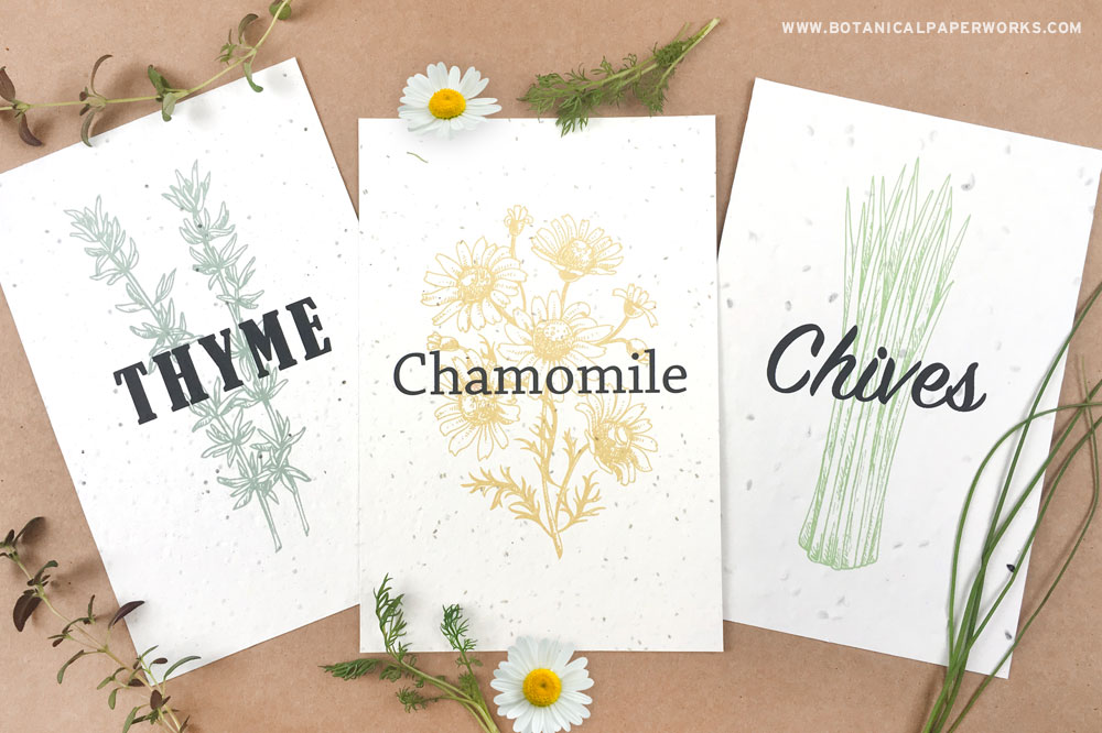 plantable seed paper with thyme, chamomile and chives