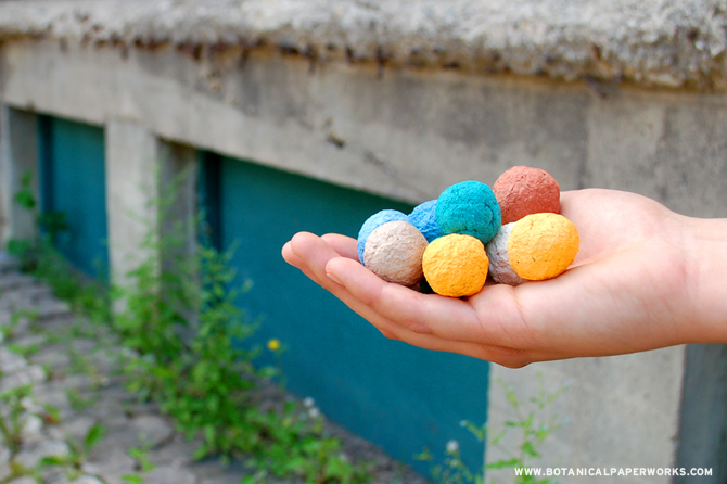 plantable seed bombs that grow into wildflowers