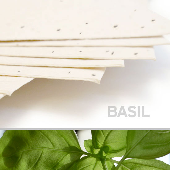 This 11 x 17 Cream Basil Plantable Seed Paper is 100% eco-friendly and embedded with wildflower seeds.
