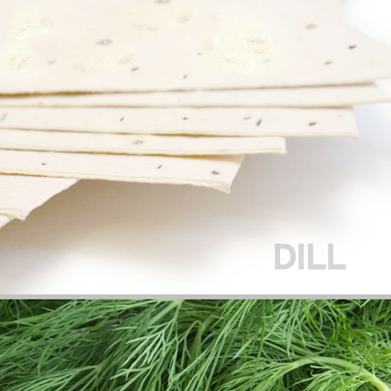 Plant this 11 x 17 Cream Dill Plantable Seed Paper to grow delicious dill!