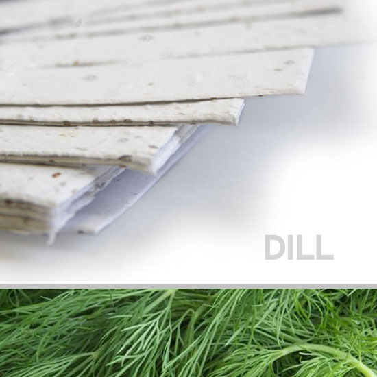 This 11 x 17 White Dill Plantable Seed Paper grows delicious dill when planted.