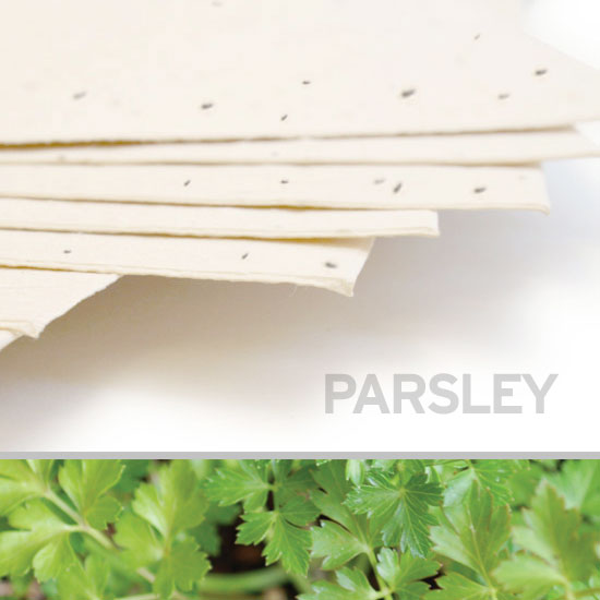 Grow a lovely garden of savory parsley when you plant this 11 x 17 Cream Parsley Plantable Seed Paper.