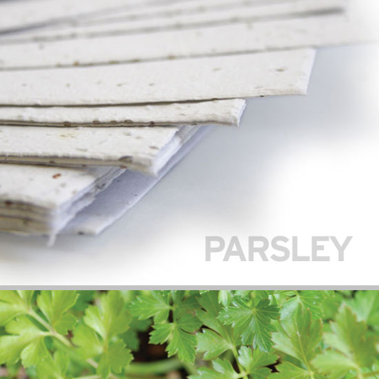You can plant this 11 x 17 White Parsley Plantable Seed Paper to grow parsley!