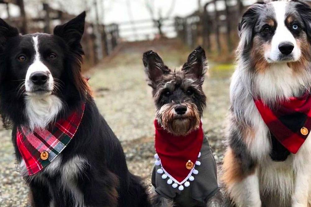 dogs wearing bandanas