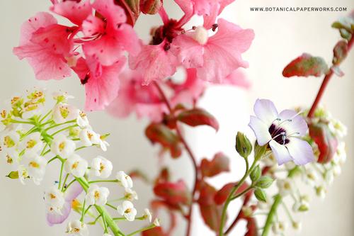 Office Seed Paper Wildflower