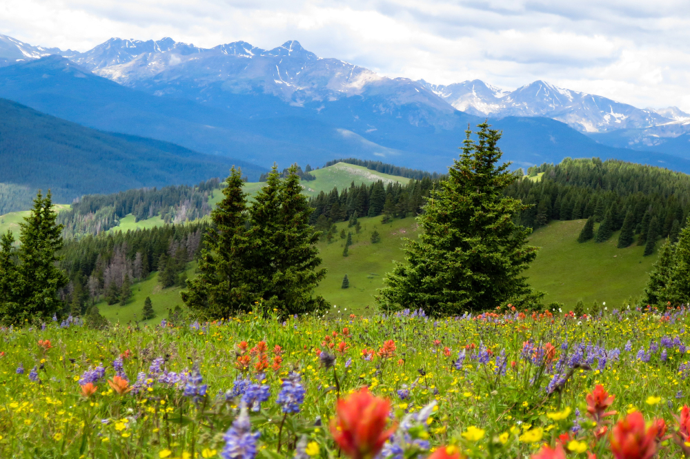 bright wildflowers on a hillside next to mountains, valleys and trees