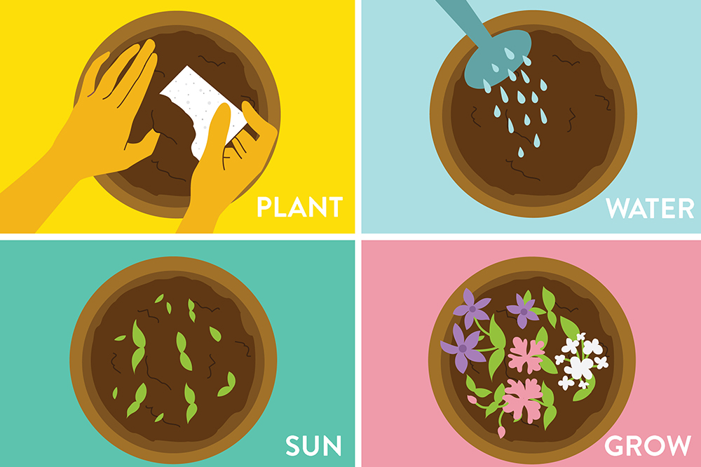 graphic of how seed paper works in 4 steps: plant, water, sun, and grow