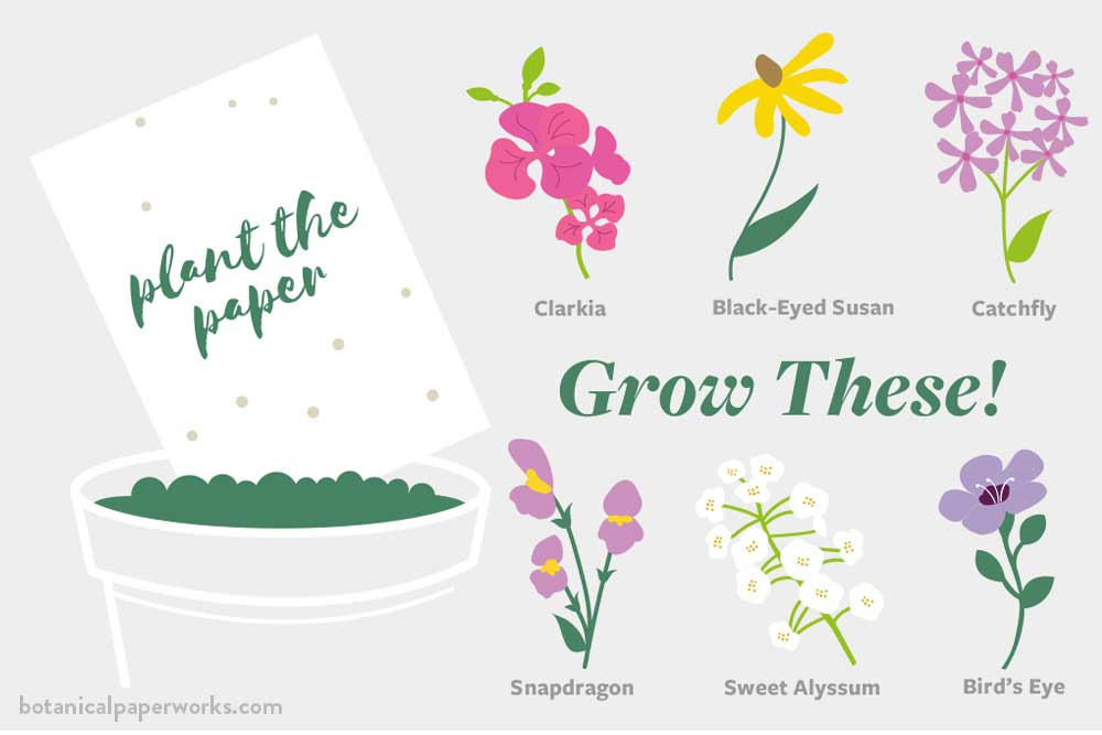 graphic of plant the paper and grow 6 different types of wildflowers