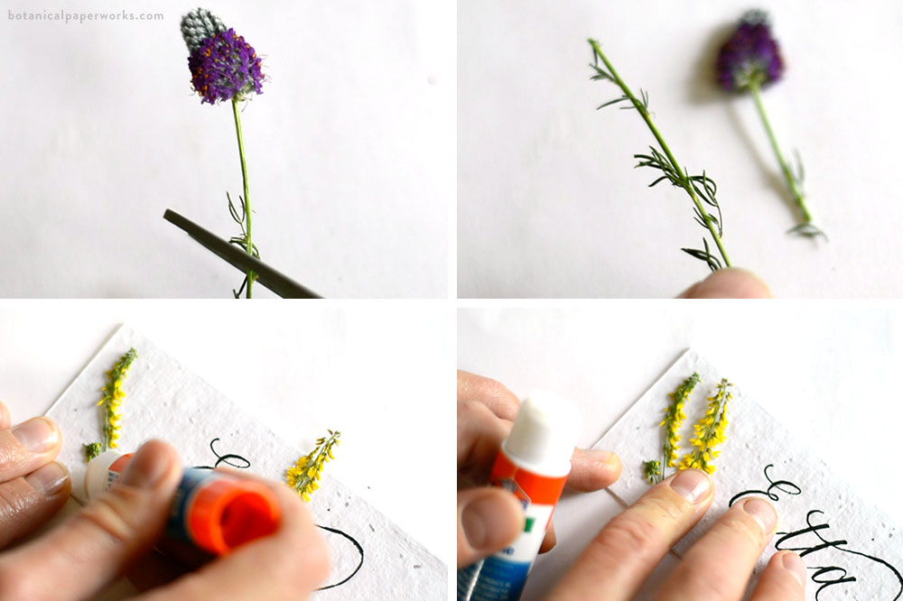 gluing dried wildflowers to plantable seed paper place cards