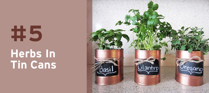 Use recycled tin cans to grow an abundance of fresh and delicious herbs.