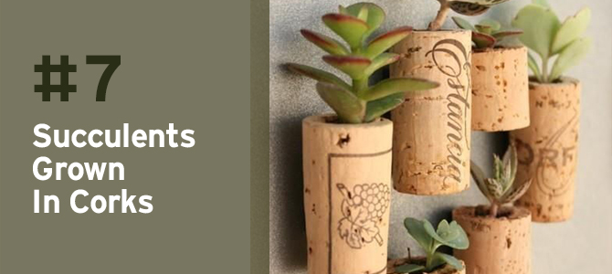 These succulents growing from corks are so charming - and you wouldn't believe how easy it is to make them!