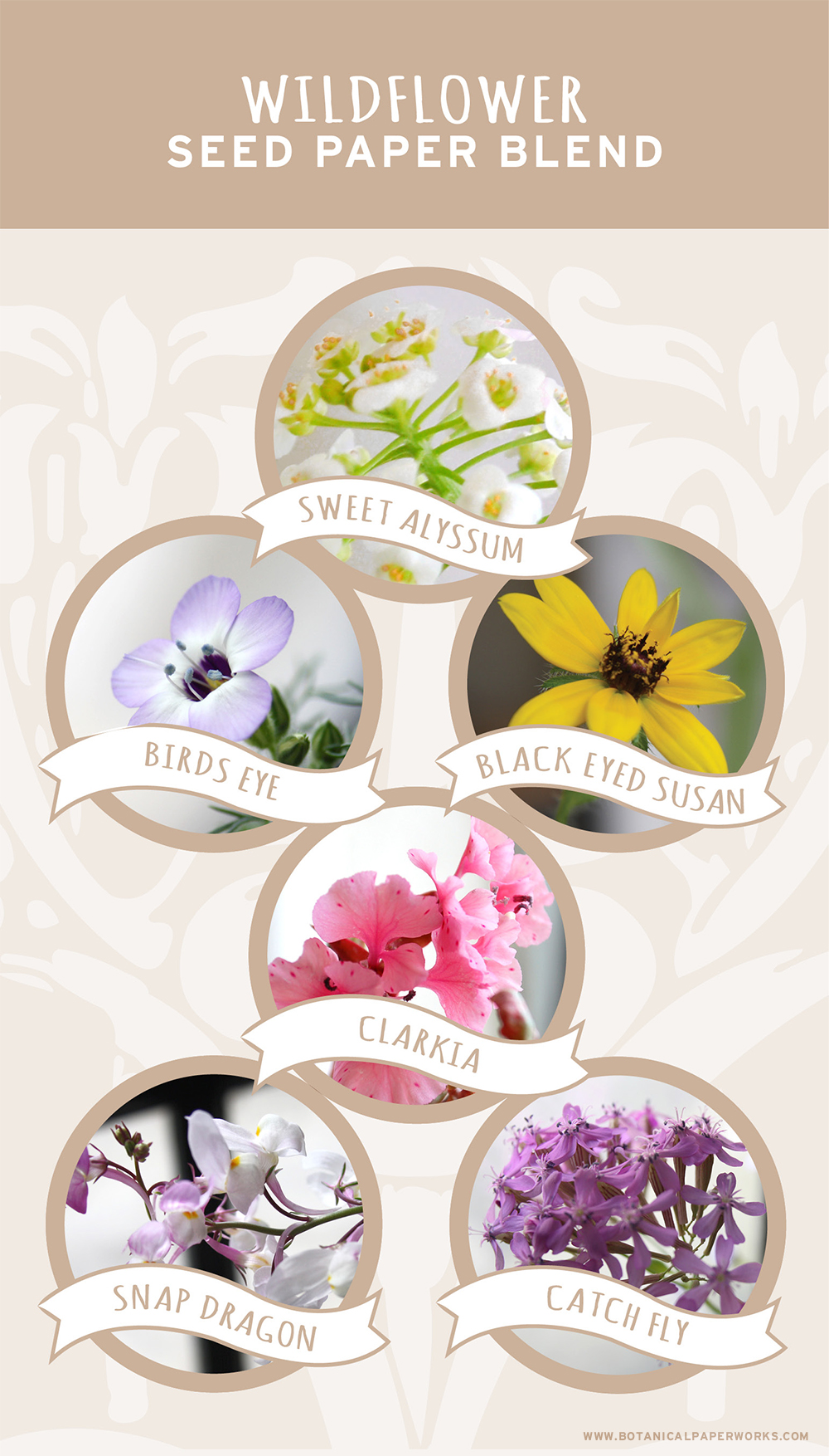 A look at each of the wildflowers you can grow with Botanical PaperWorks seed paper.