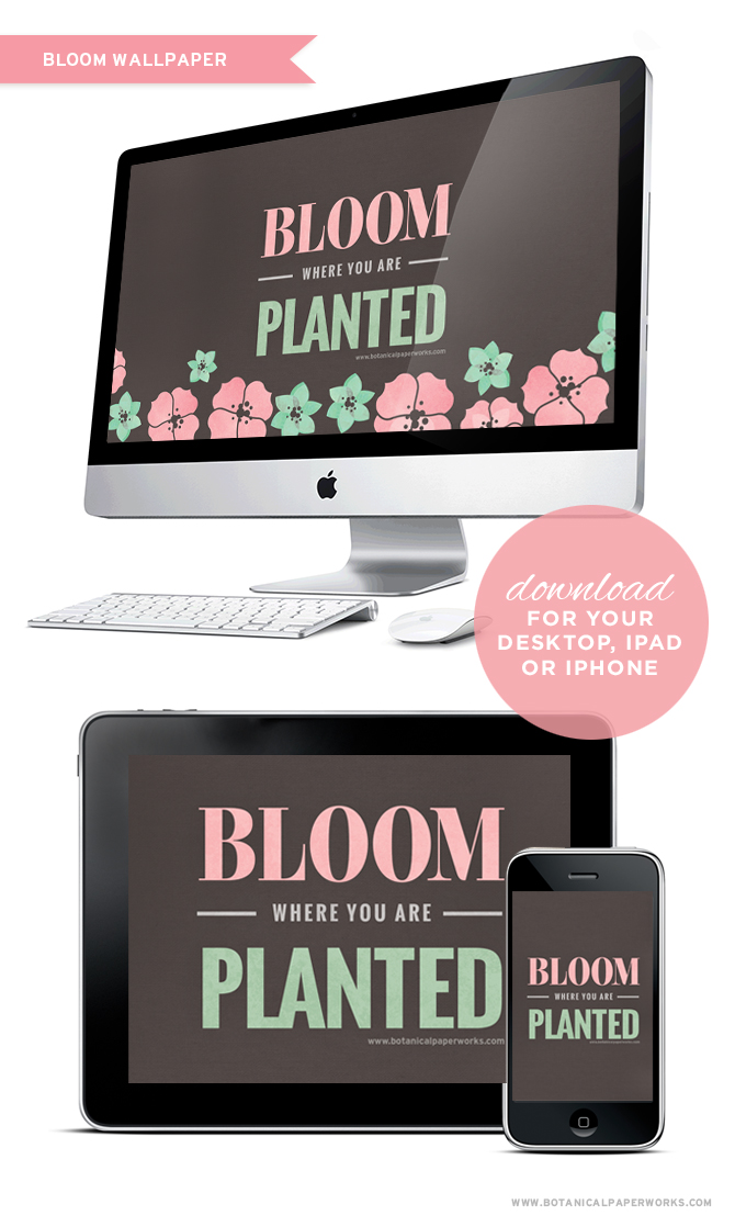 "A fresh design to download on all your devices featuring the inspirational quote ""Bloom Where You Are Planted"""