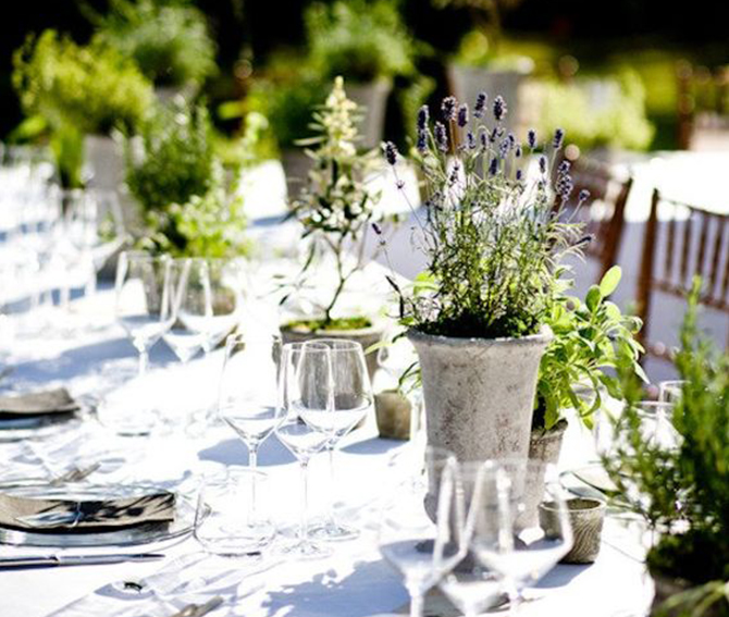 Using a potted plant as a centerpiece for your wedding tables will not only add a touch of rustic charm to the decor, but it'll also make your wedding even more eco-friendly. Find out more ways to have a plant powered #wedding!