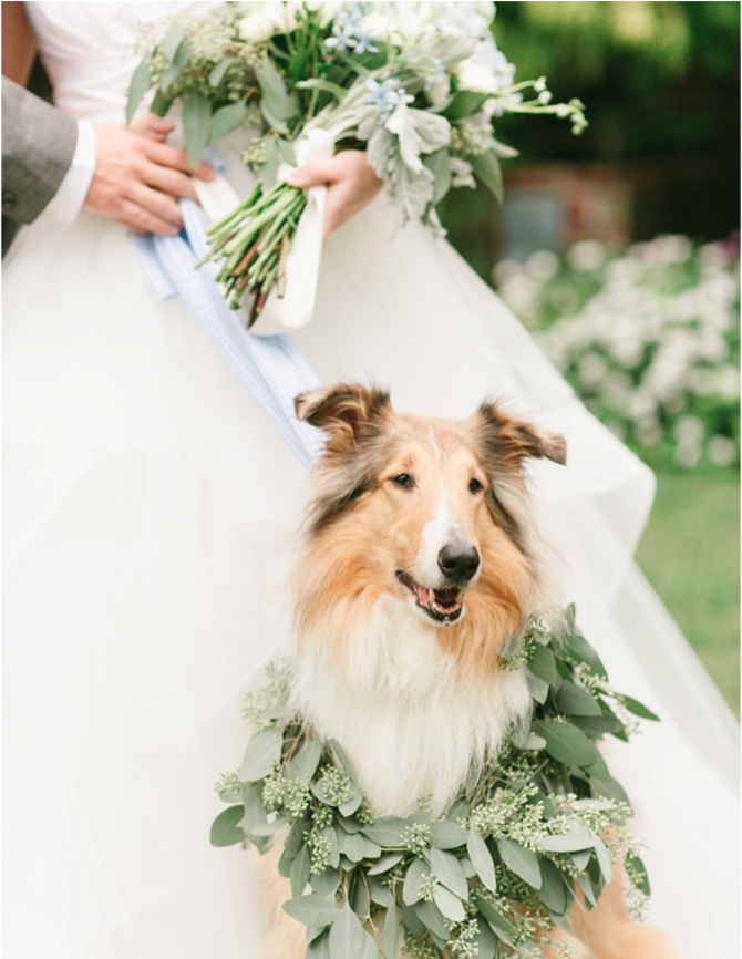 Don't leave your furry friend out of your wedding celebration - it's one of the most adorable ways to make your day more unique.