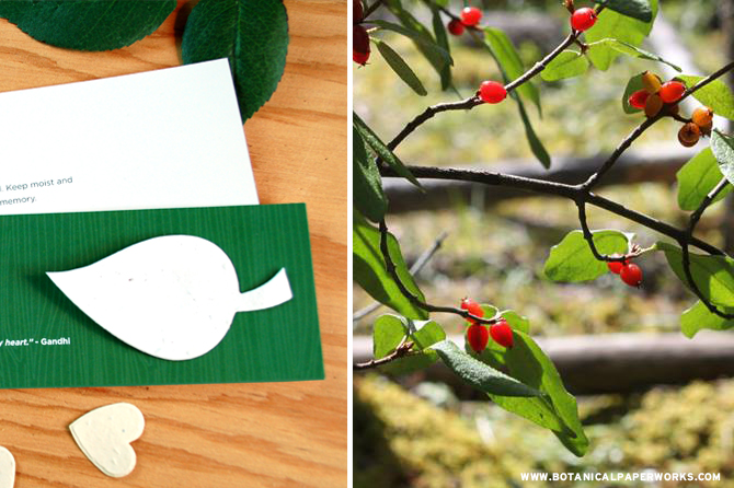 Planting seeds & watching them grow can help the healing process. Take a look at our NEW eco-friendly #memorial favors + 5 ways that nature can help with #grief.