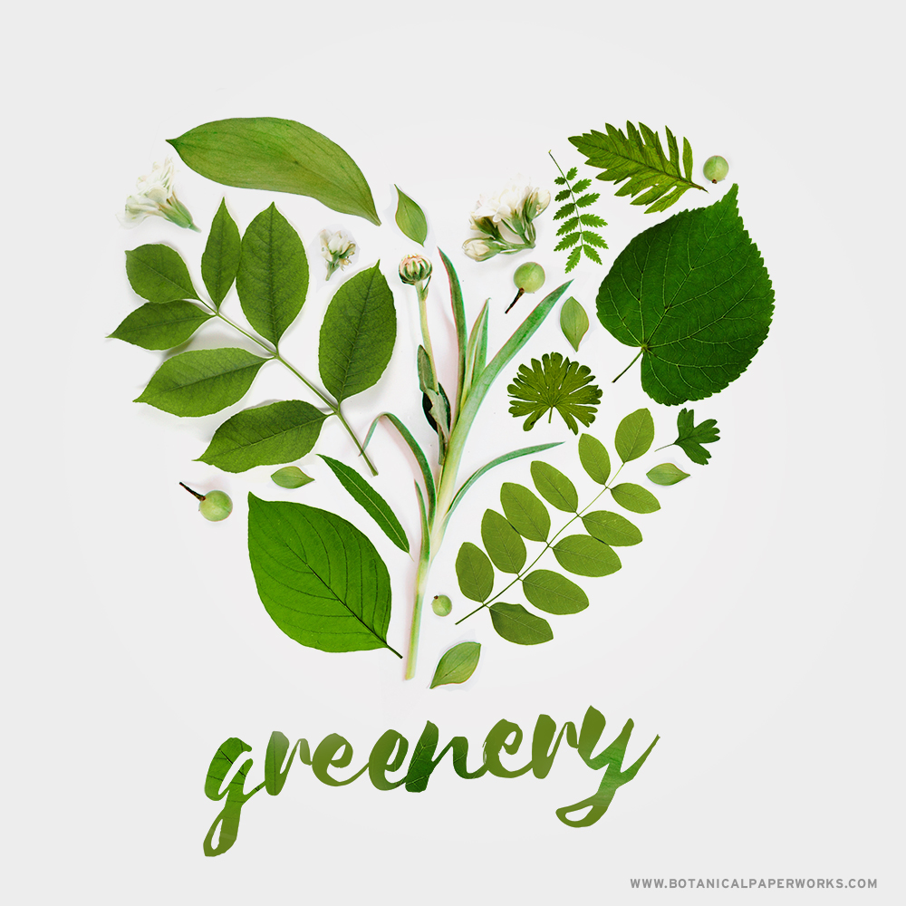 A look at the significance of Greenery, Pantone's color of the year for 2017 and why we think it's one of the best choices yet.