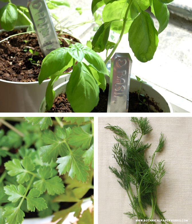 Herbs grown from seed paper from Botanical PaperWorks