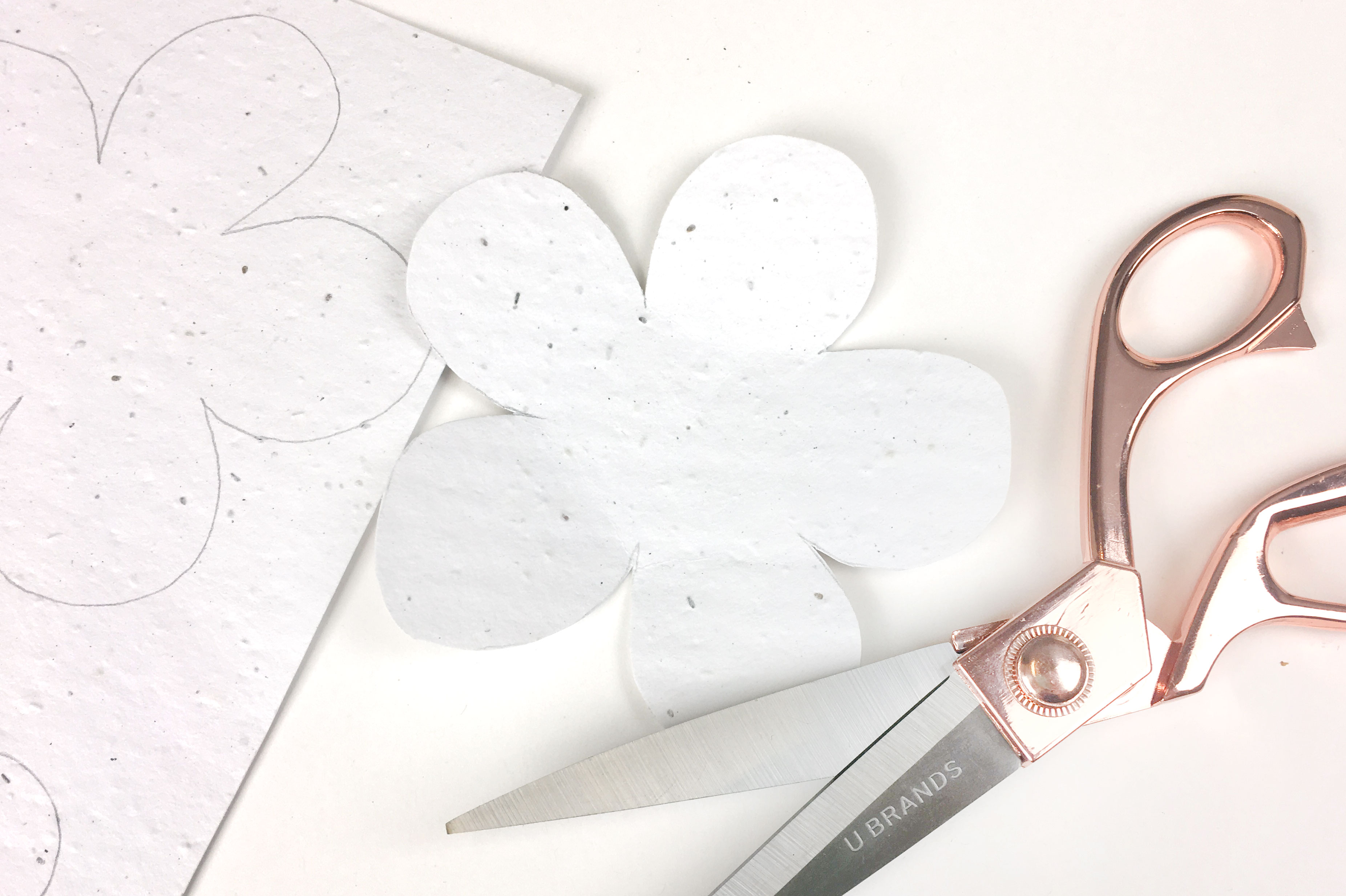 Learn the steps in this DIY craft tutorial for making hanging seed paper flower wall art!