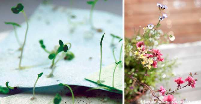 From paper to flower - see how plantable paper actually blooms into gorgeous flowers.