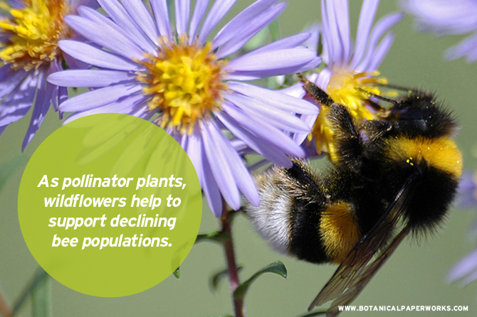 """""""Everything falls apart if you take pollinators out of the game. If we want to say we can feed the world in 2050, pollinators are going to be part of that."""" - Dennis vanEngelsdorp, a University of Maryland bee expert."""