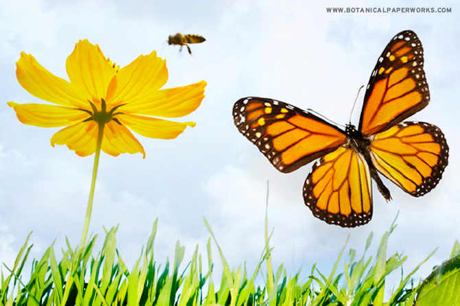 Honeybees and butterflies play an important role in the health of the natural eco-system but populations are declining at an alarming rate. Take a look at this post to find out everything you need to know about helping them thrive.