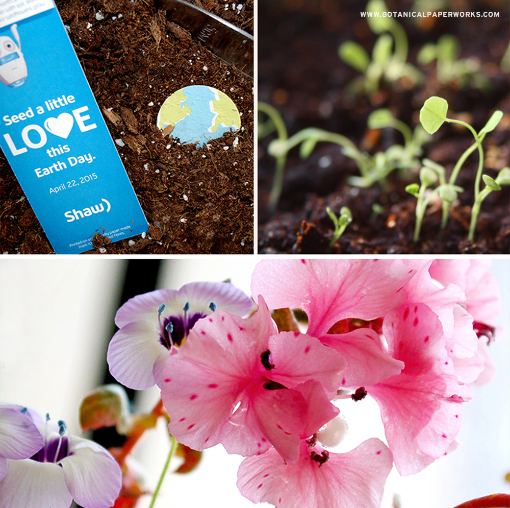 Take a look at how these #ecofriendly seed paper bookmarks won an award at the 2016 Image Awards! #seedpaper