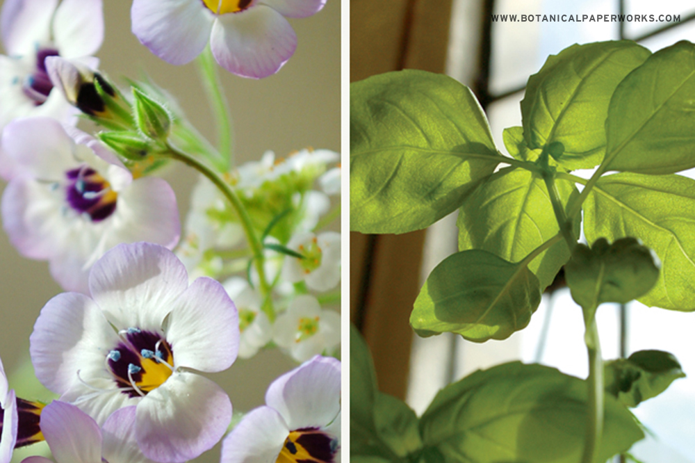 Wildflowers and herbs grown from Seed Paper by Botanical PaperWorks/Seed Paper Promotions