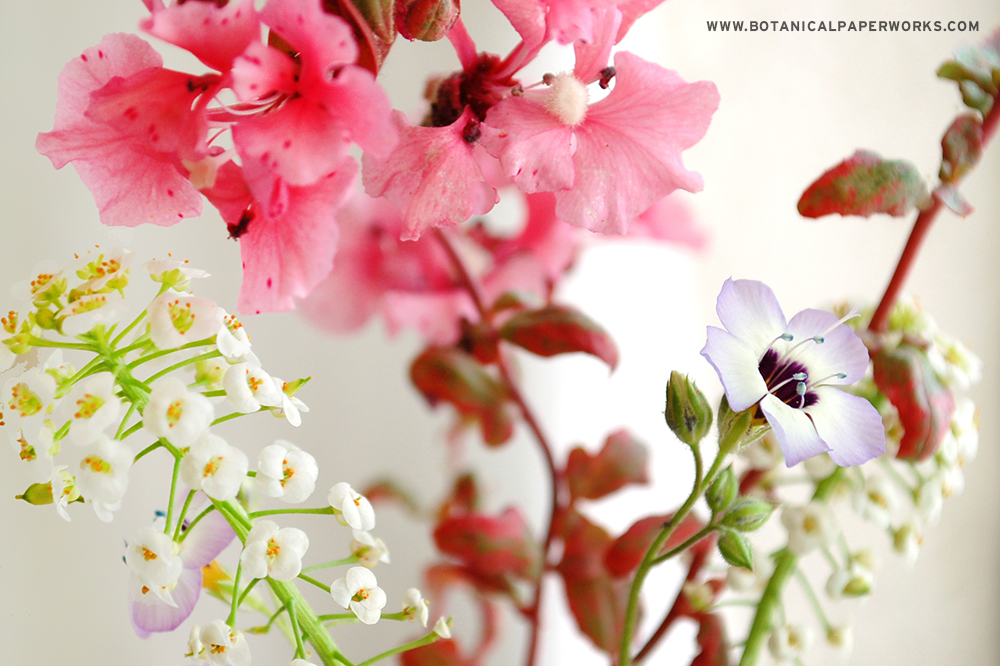 Wildflowers grown from Seed Paper by Botanical PaperWorks/Seed Paper Promotions