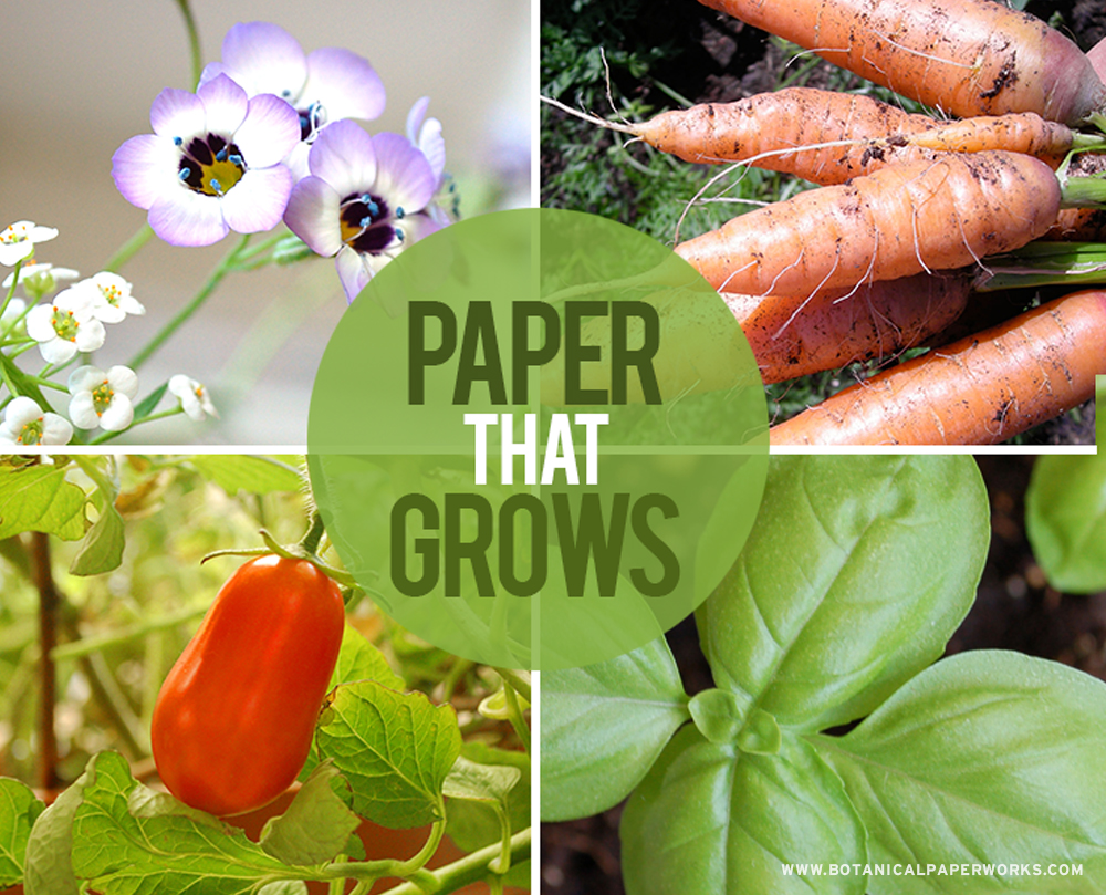If you're looking to send a message with a fun summer vibe, seed paper promotional products from Botanical PaperWorks are perfect for the season of growth! Learn more and get ideas for your promotions.