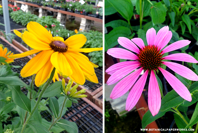 Check out these great tips for Summer gardening from Botanical PaperWorks