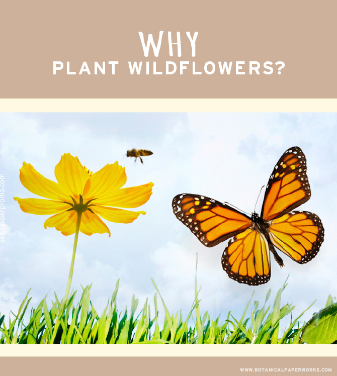Wildflowers create a habitat for birds, bees, butterflies and other insects.
