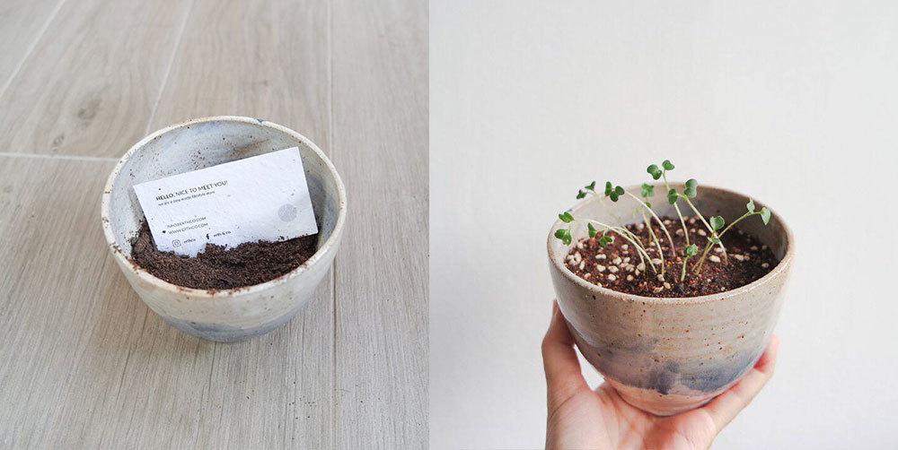 seed paper business cards that grew into sprouts after planted